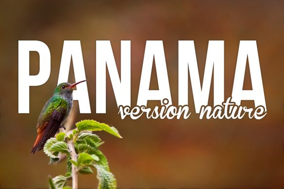 panama_nature-IMG_4115_titre