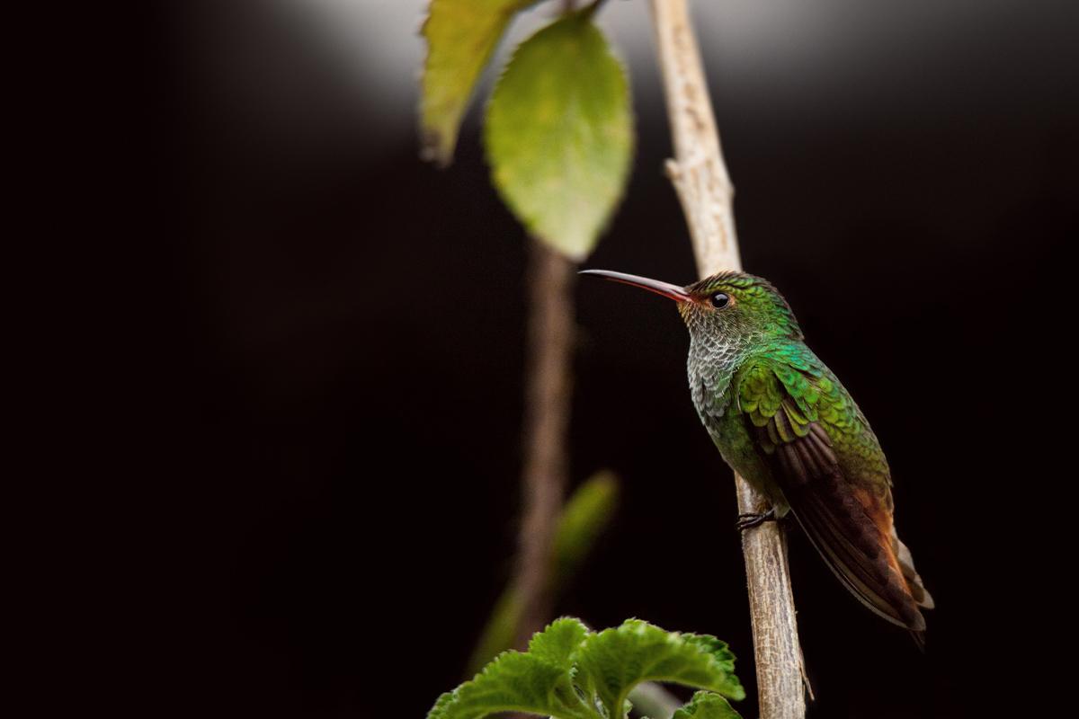 panama_nature-IMG_4116