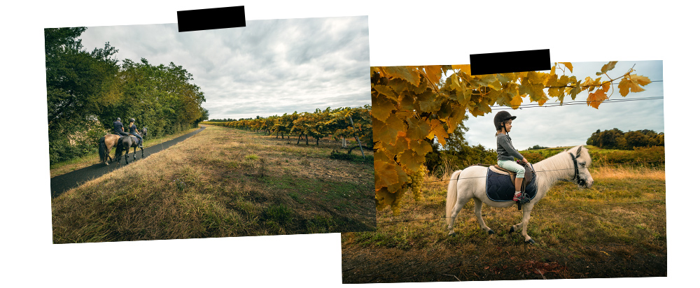 promenade à cheval à Barbezieux