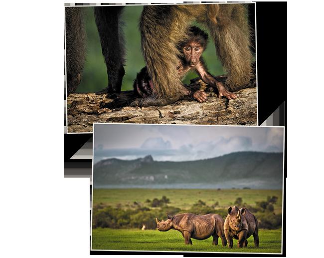 Voyage au Kenya