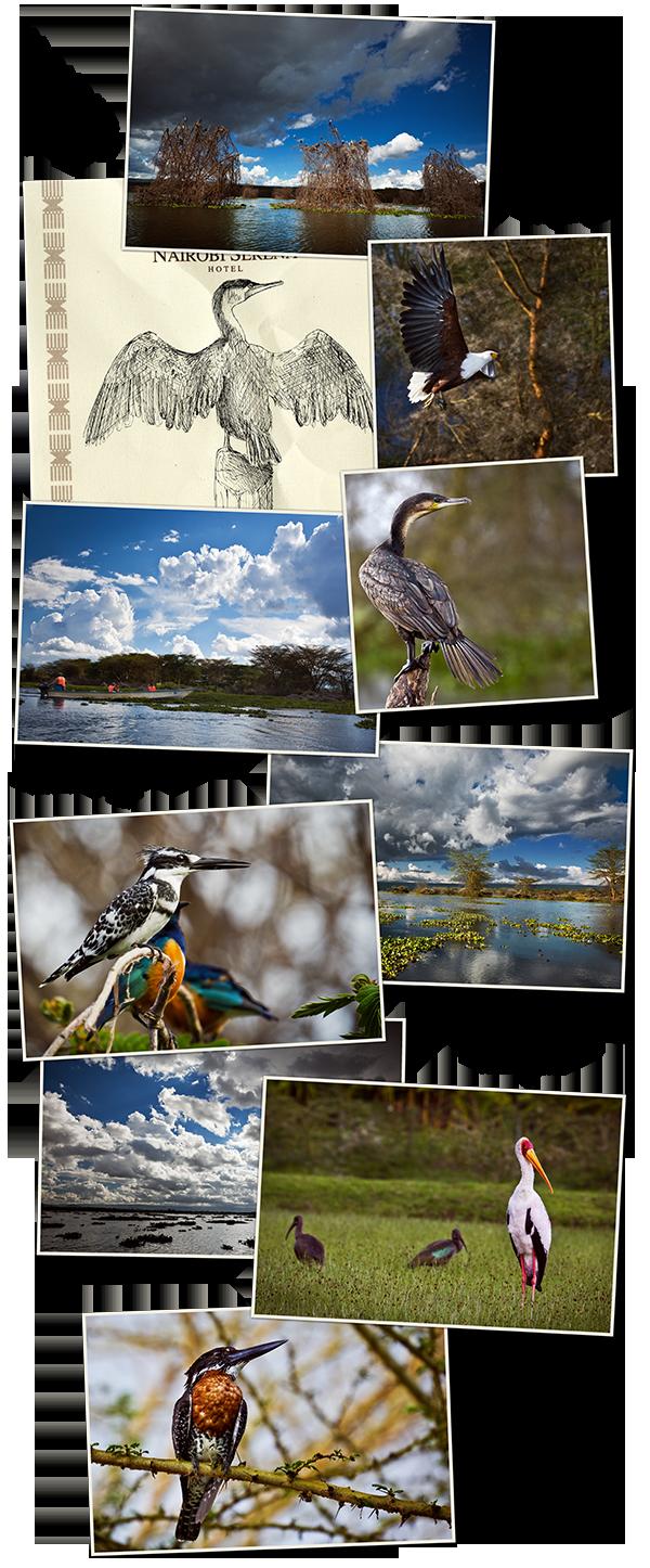 kenya1_04_bateau_et_oiseaux