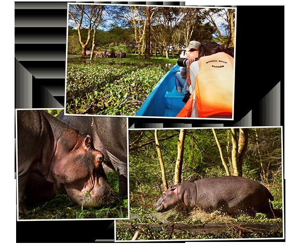 kenya1_05_hippos