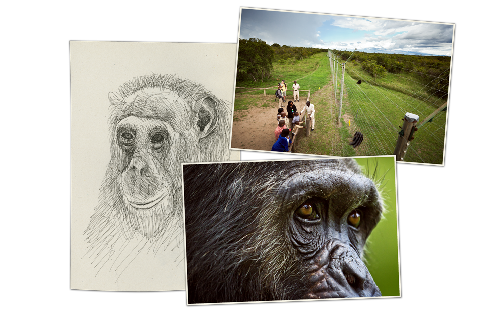 kenya3_03_chimpanze