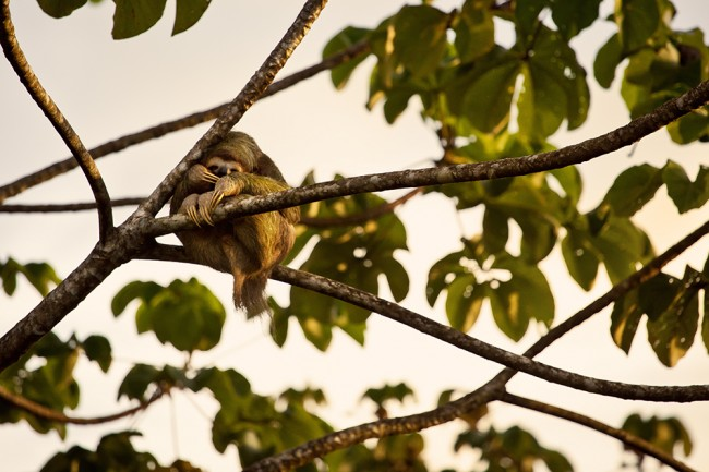 CostaRica_050_IMG_9939_1 copie