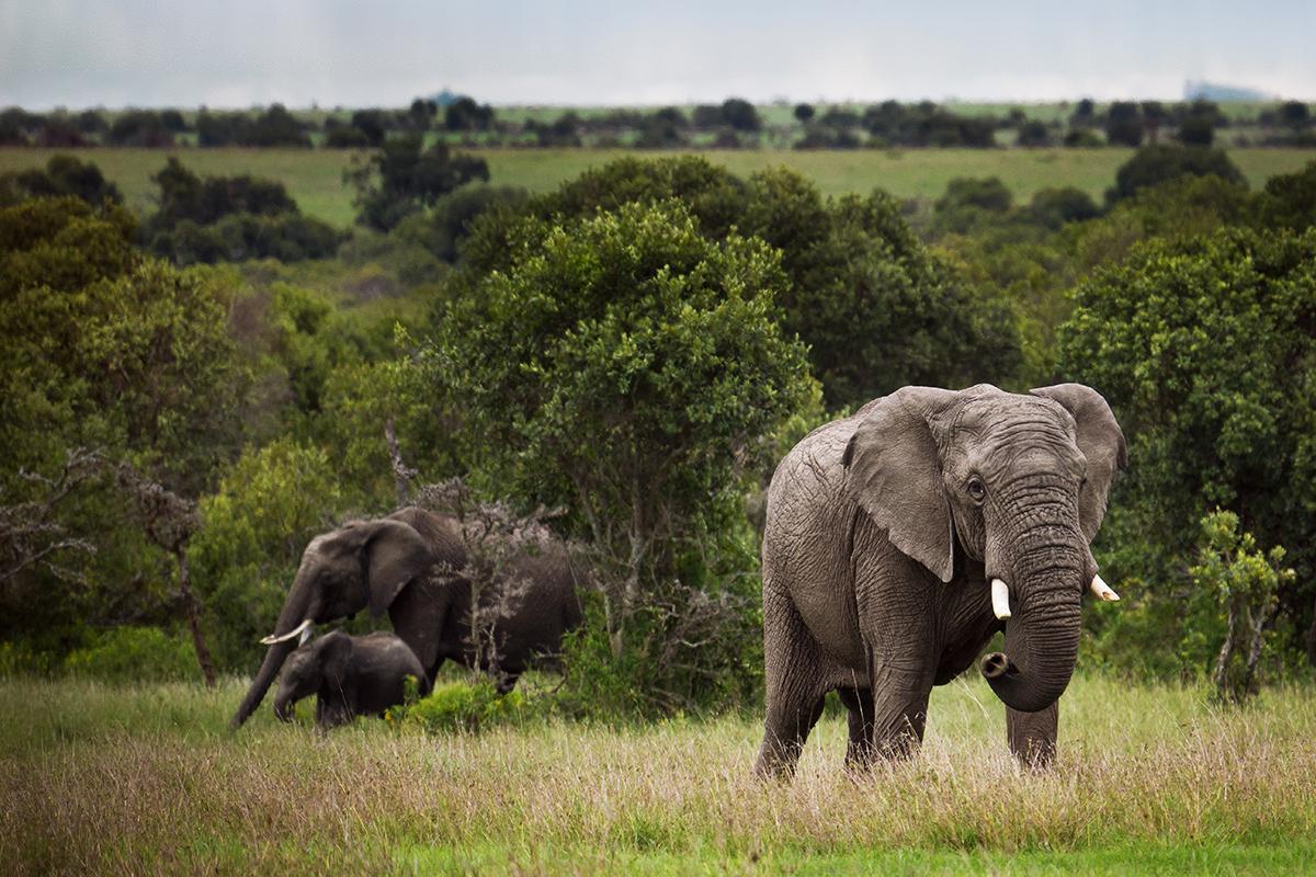 J4_elephants3