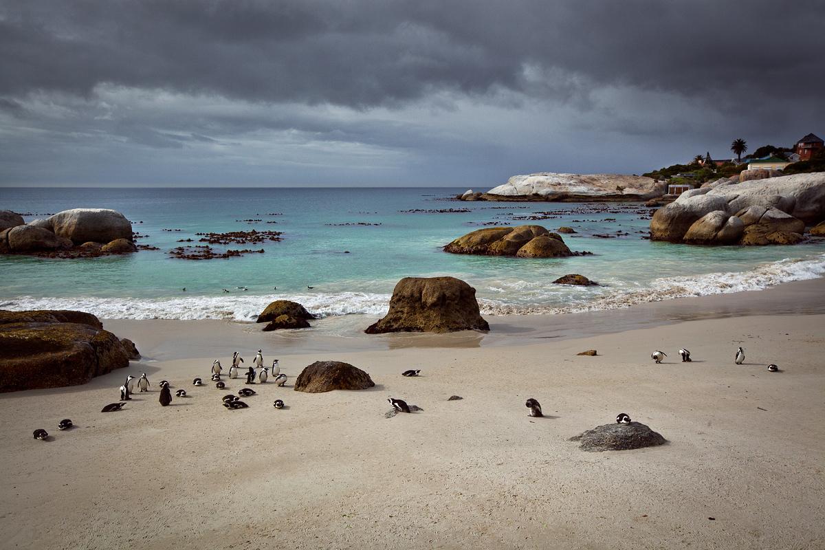 IMG_9020_Afrique-du-Sud_015