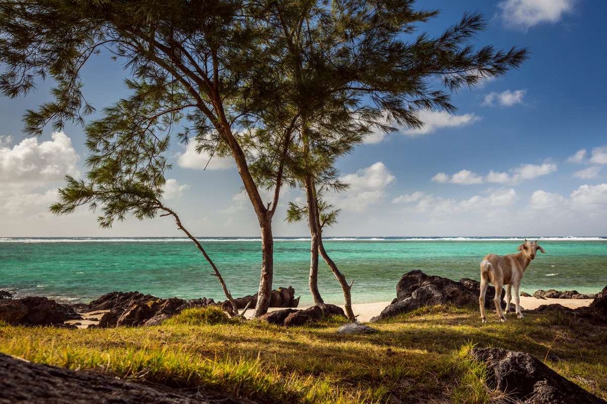 ile-maurice-et-rodrigues_IMG_8323