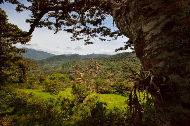 panama_nature-IMG_3905