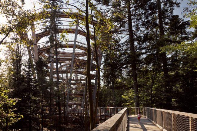 Forêt-Noire / Bad Wildbad : le sentier de la canopée