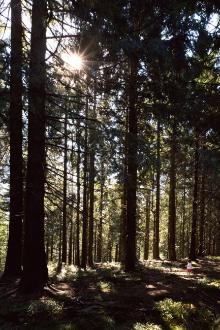 randonnée dans la Forêt-Noire