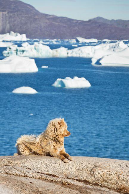 Saqqaq, voyage au Groenland