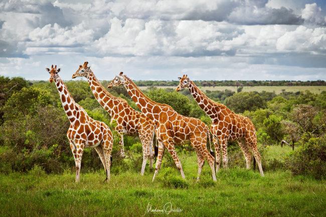 Safari photo en Afrique