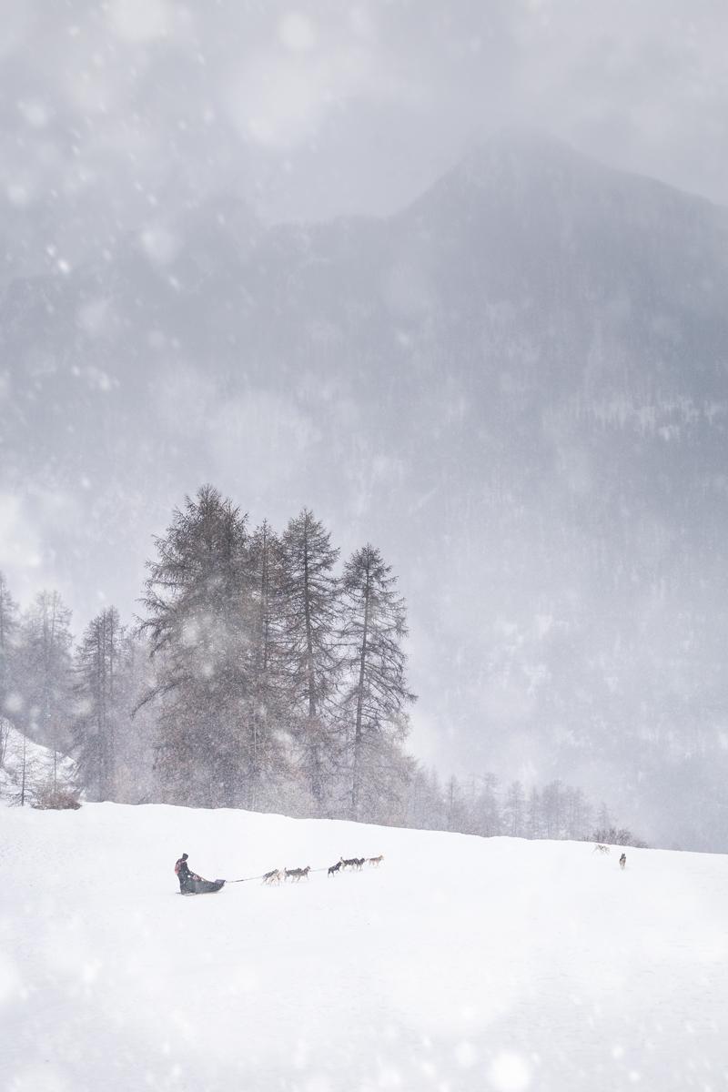 Chien de traineau - Les Orres
