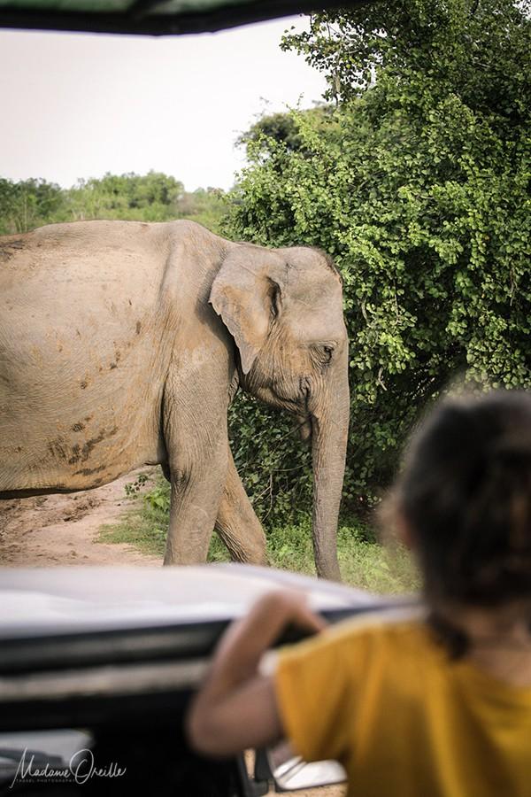 Sri Lanka en Famille
