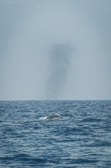 baleine à mirissa