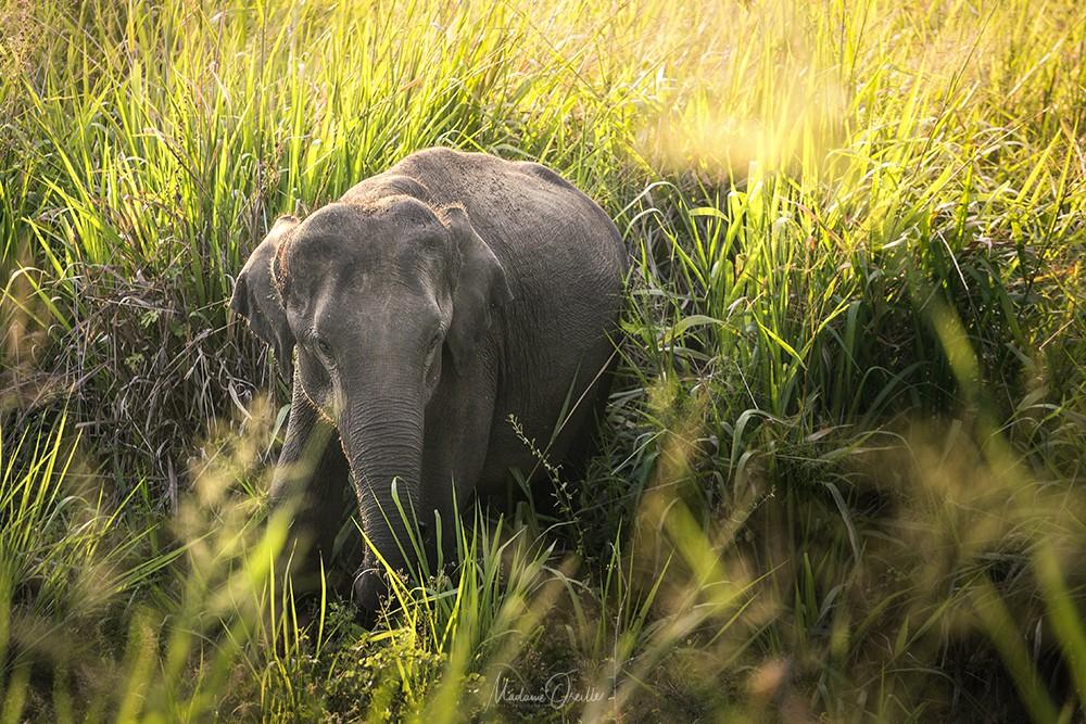 Kaudulla, Sri Lanka
