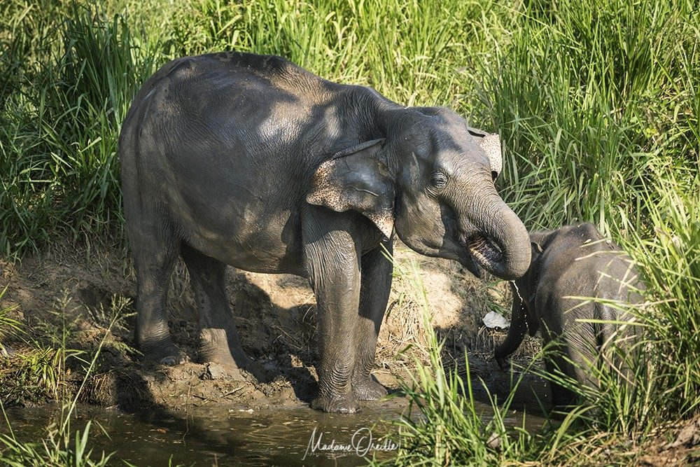 Sigiriya : safari à Kaudulla pour observer les éléphants