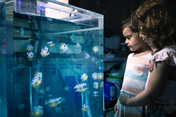 Gênes en famille - aquarium