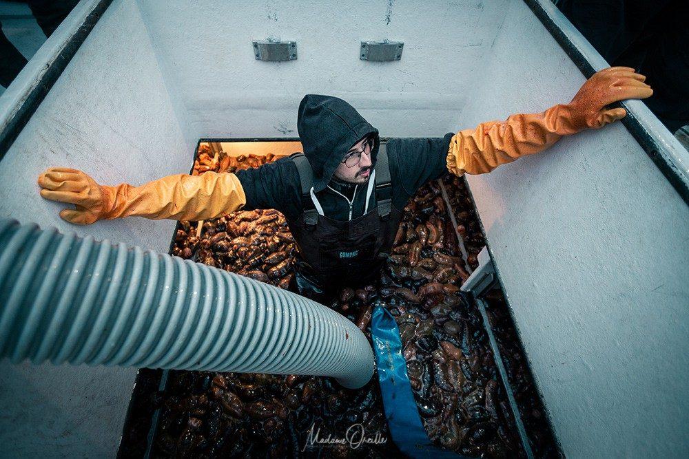 Dans la cuve du bateau, pleine de concombre de mer