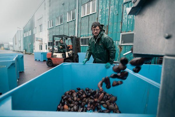 Les concombres sont transportés directement à l'usine