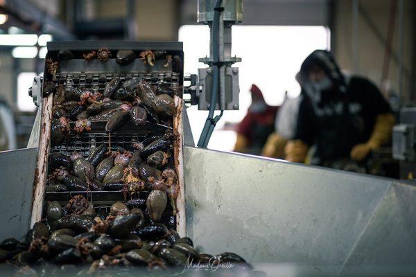 Usine de tri et traitement des produits de la mer