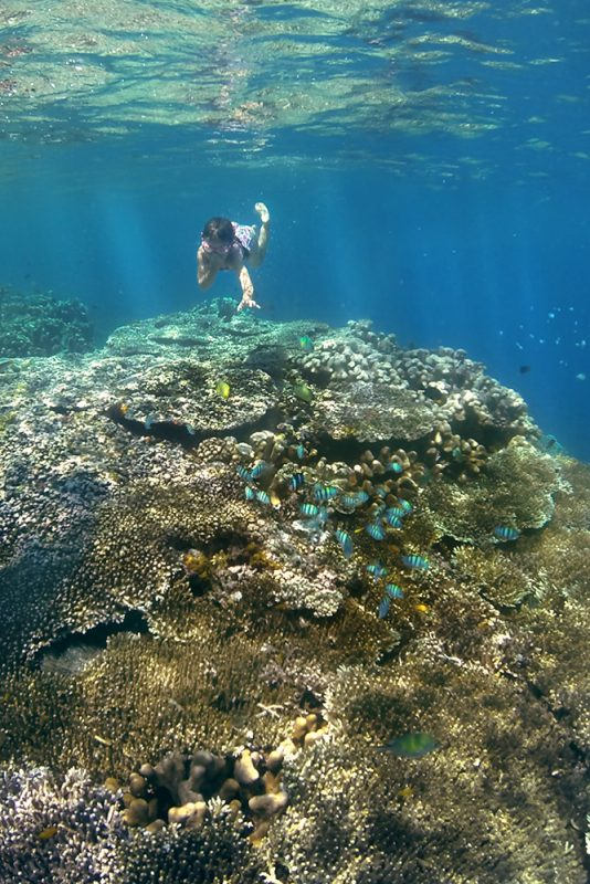 ma fille découvre les joies du snorkeling au milieu des poissons et coraux de sulawesi
