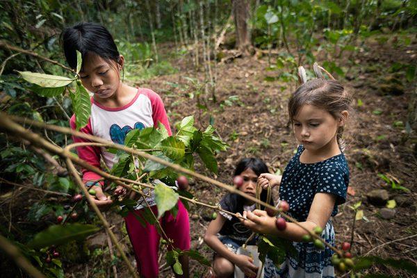 Les enfants ramasse les grains de café