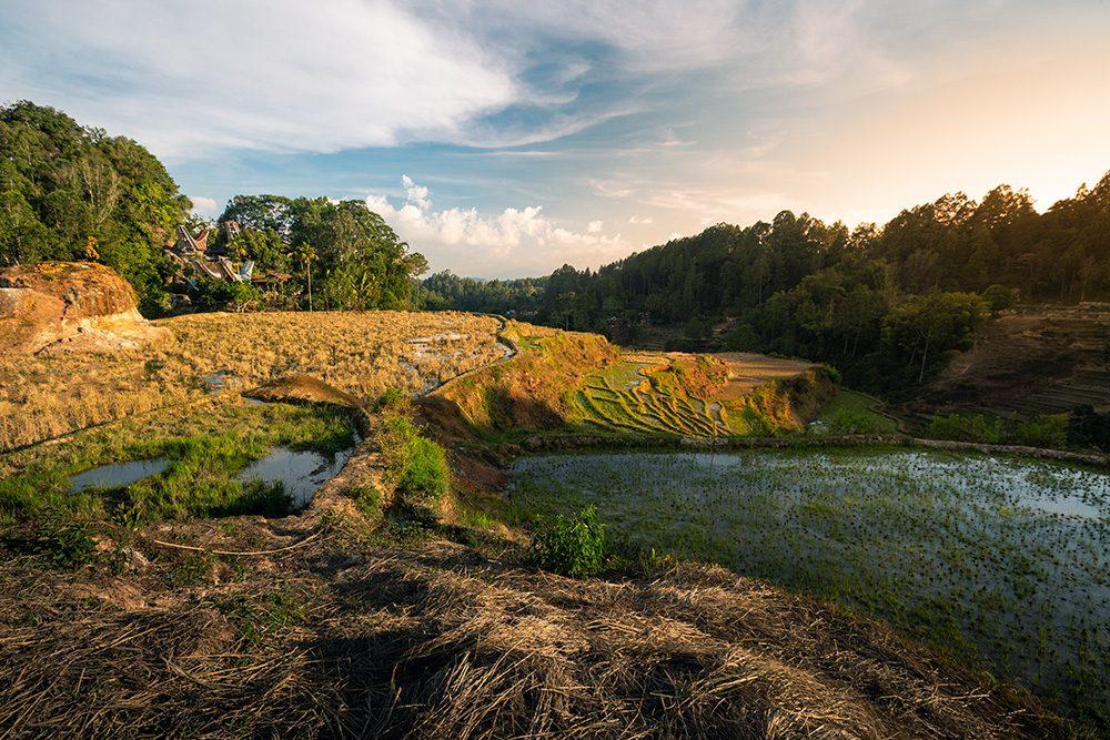 Randonnée au milieu des rizières