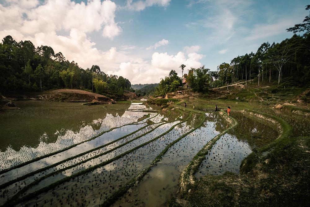 Randonnée dans les rizières au Pays Toraja