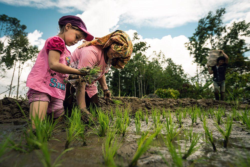 Chez l'habitant en Indonésie : dans les rizières