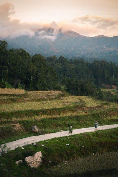 rizière au pays toraja