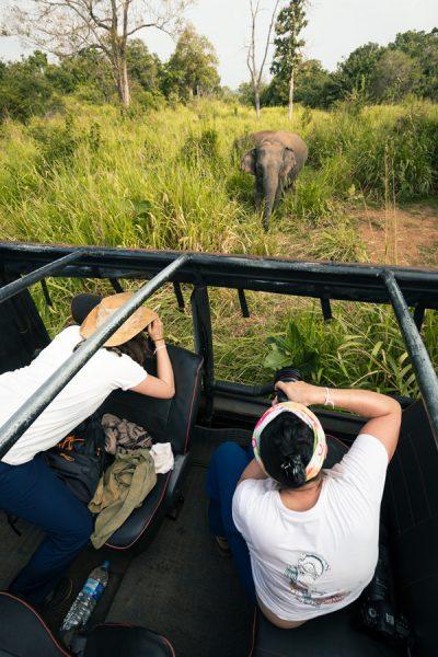 safari pendant le stage photo au Sri Lanka